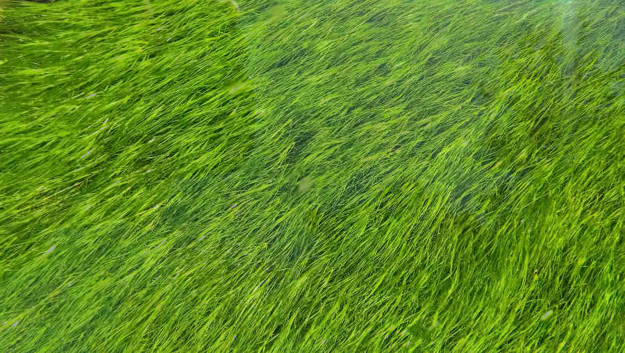När det är dags att klippa gräset och införskaffa sig en gräsklippare!