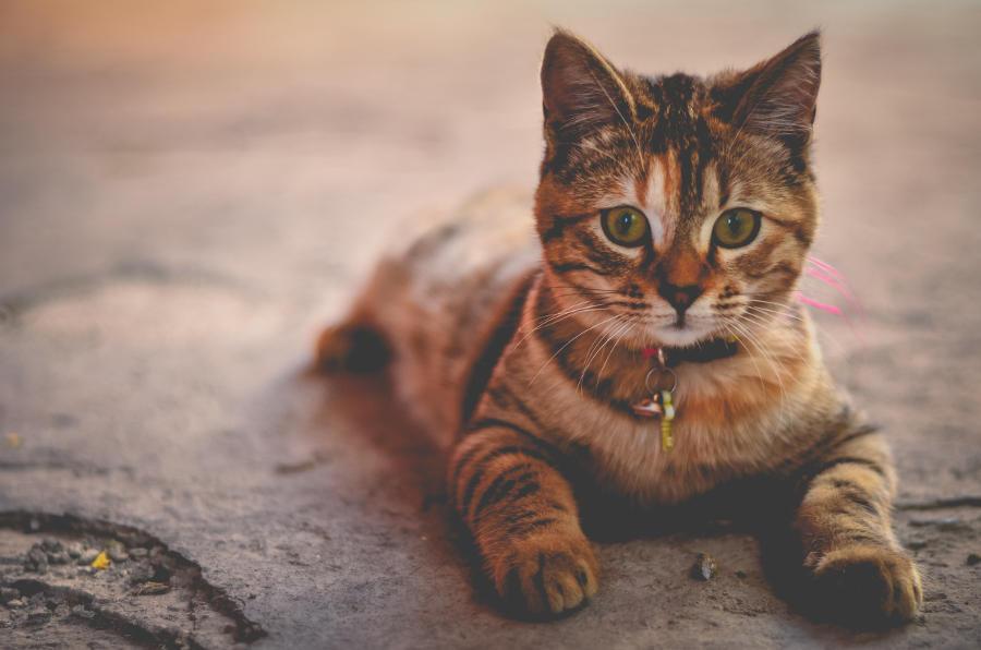 Hur ofta ska man vaccinera sin hund eller katt?