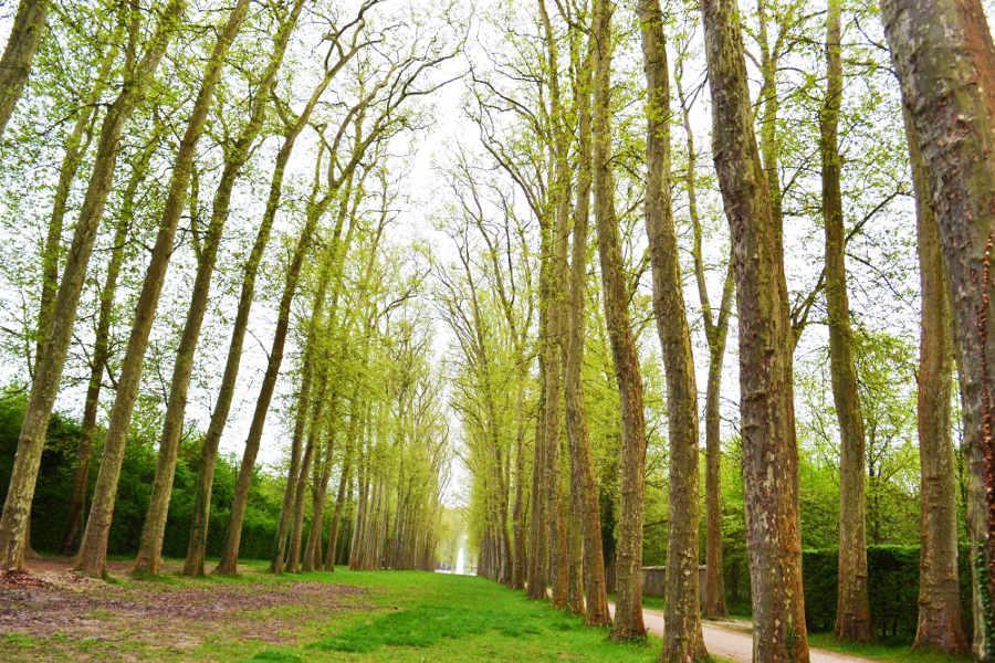 När ska en trädfällare fälla trädet?