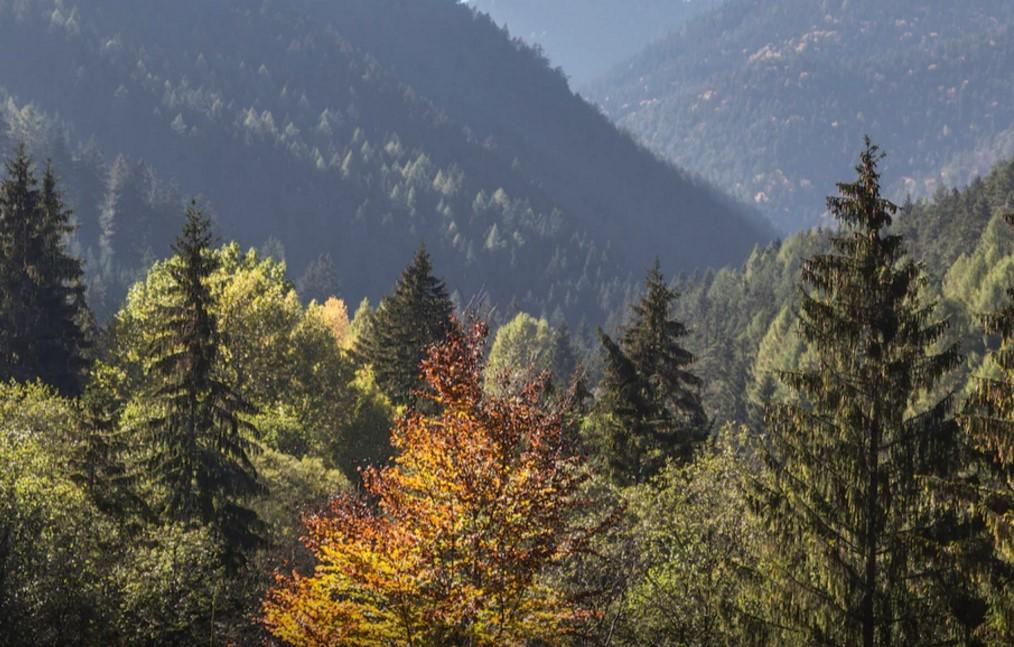 Skogsvård är viktigt för en frisk skogsindustri