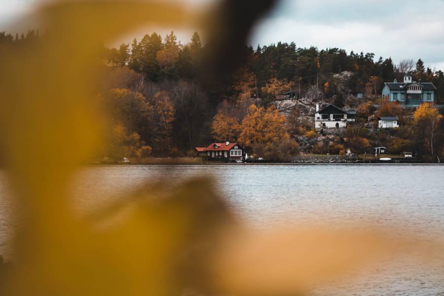 Arborist i Stockholm – Att anlita en